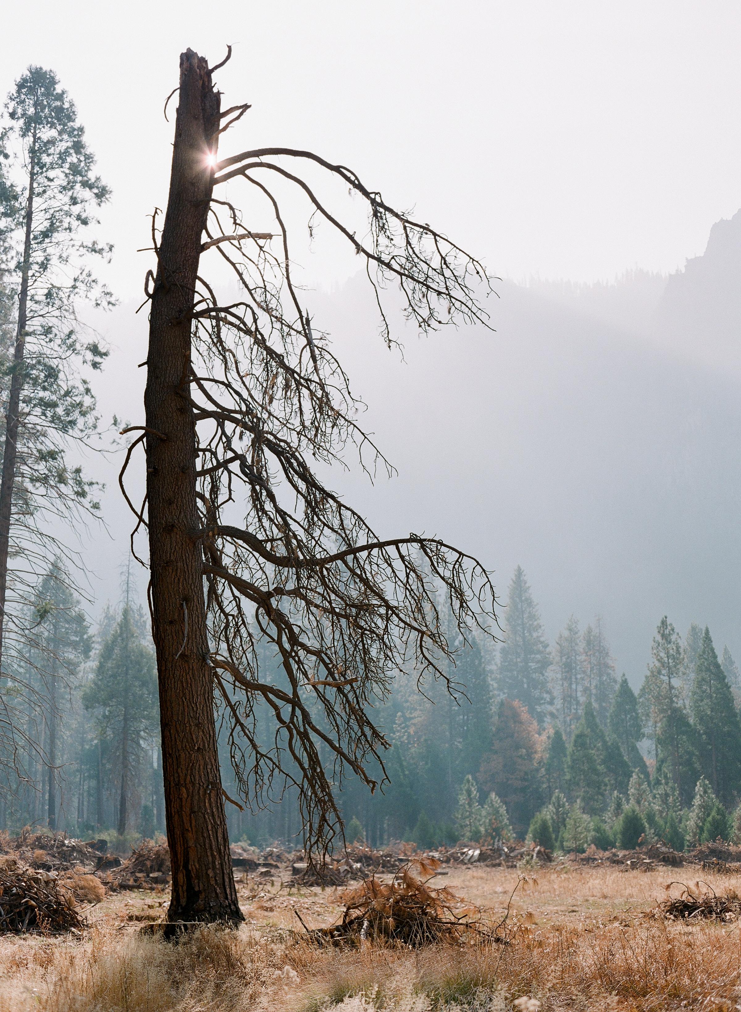 Brandon Sampson-2018-11-Yosemite-22.jpg