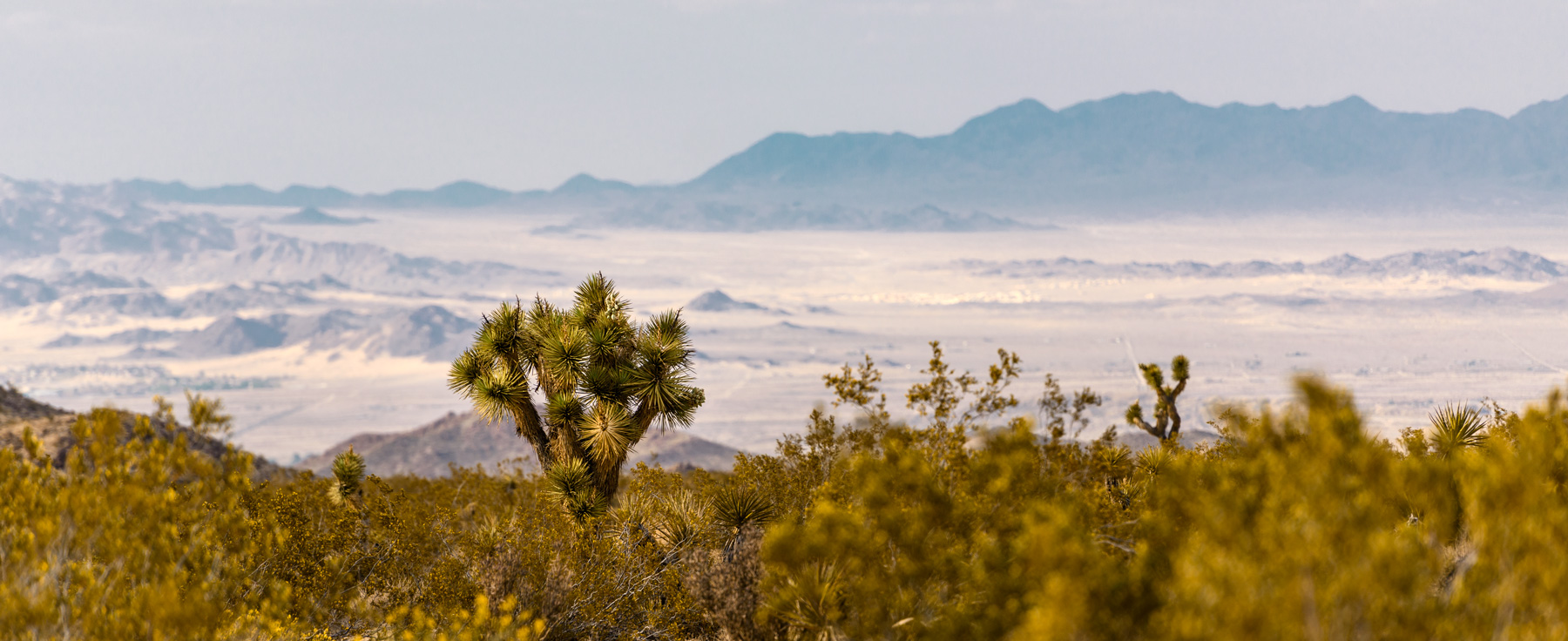 Joshua-Tree_View.jpg