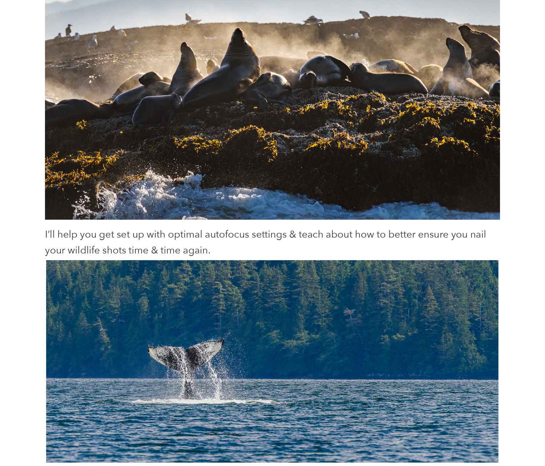 5 vancouver island photo workshop.jpg