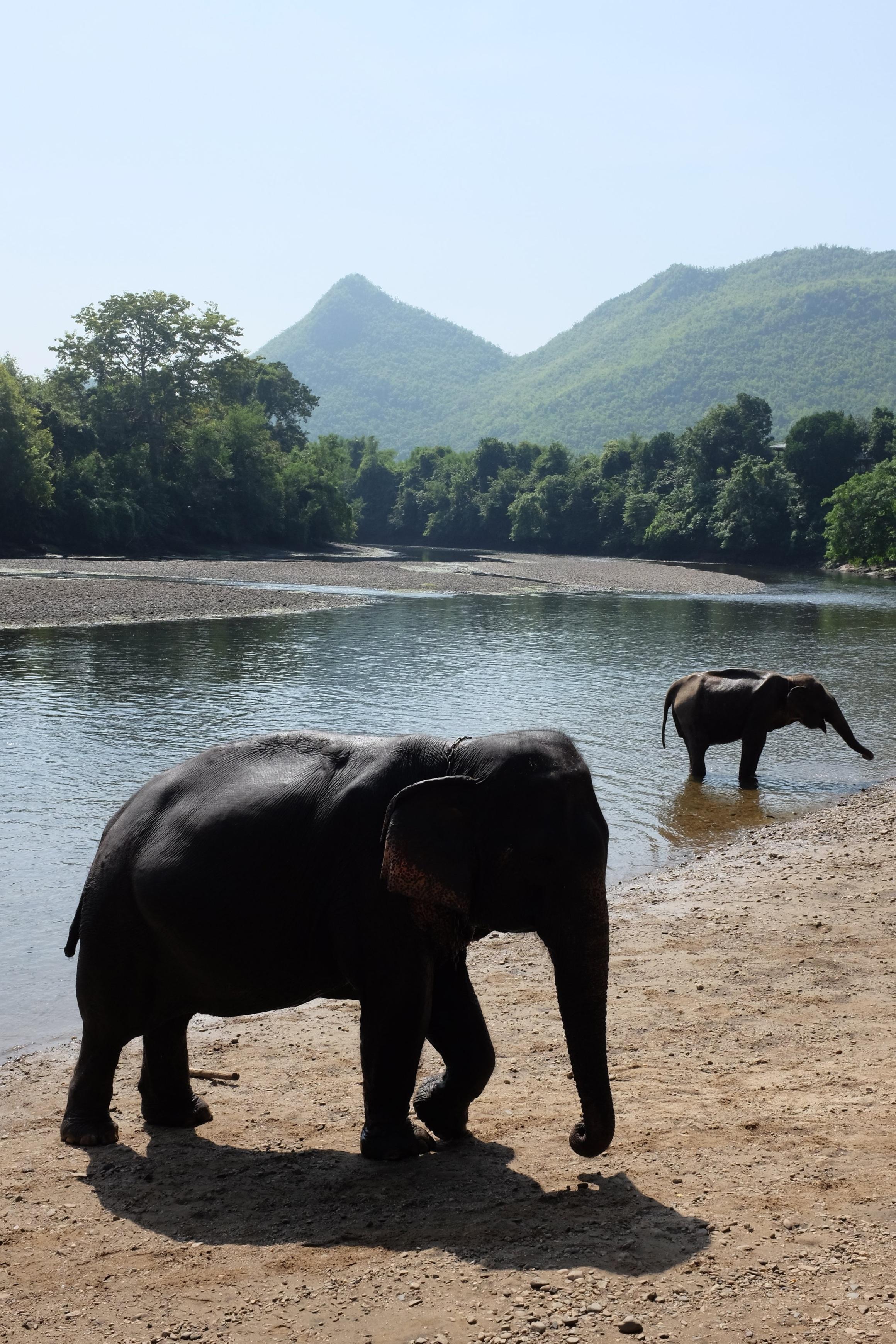 Elephants bathe in the river.