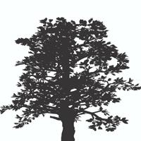 ironwood-american-bistro.png
