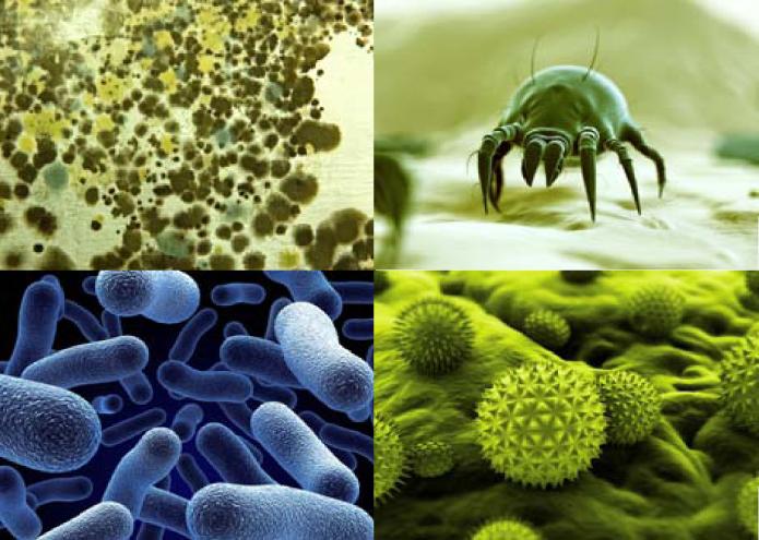 dustmite.pollen.mold.bacteria (1).jpg