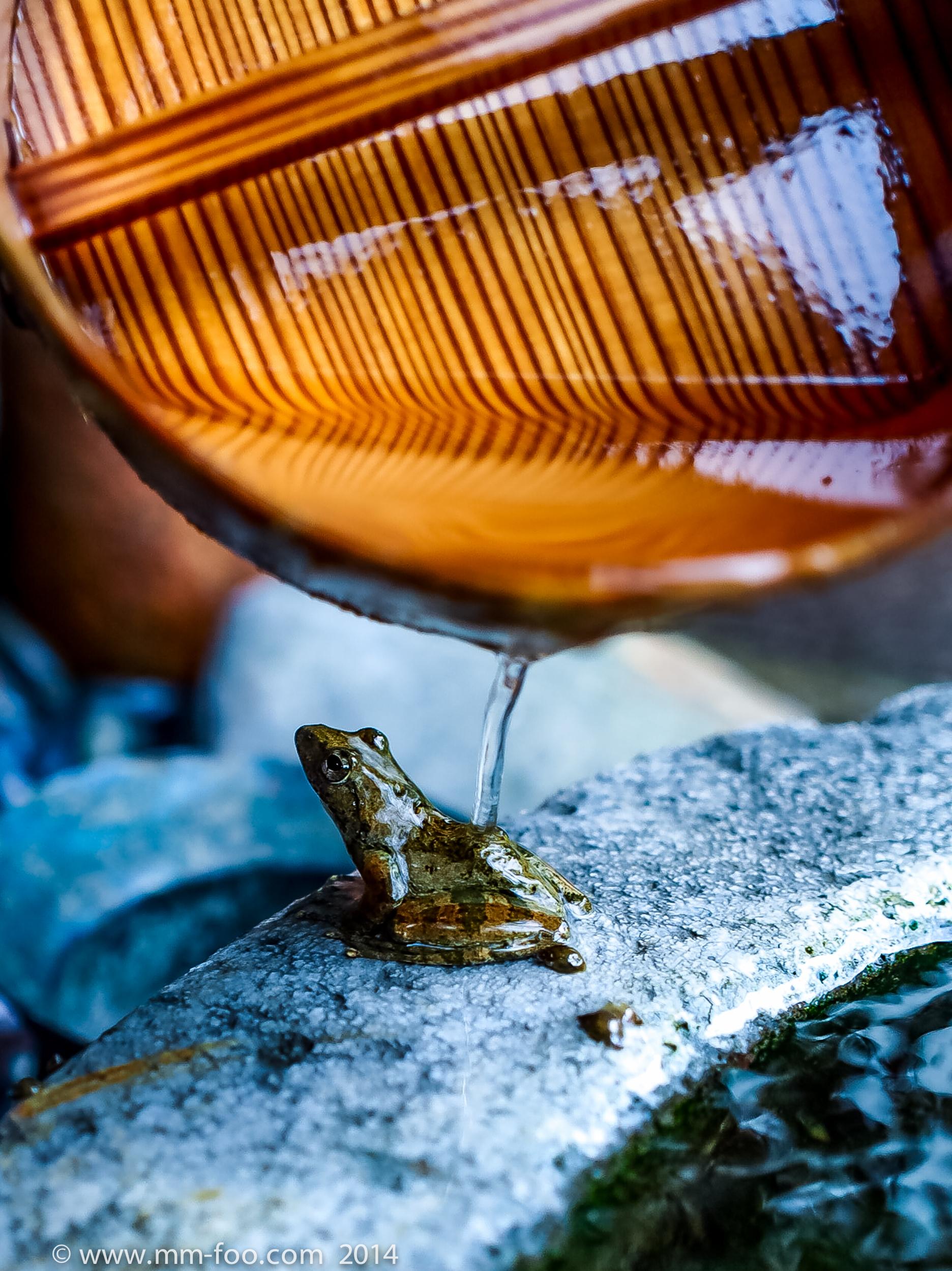 Onsen Frog