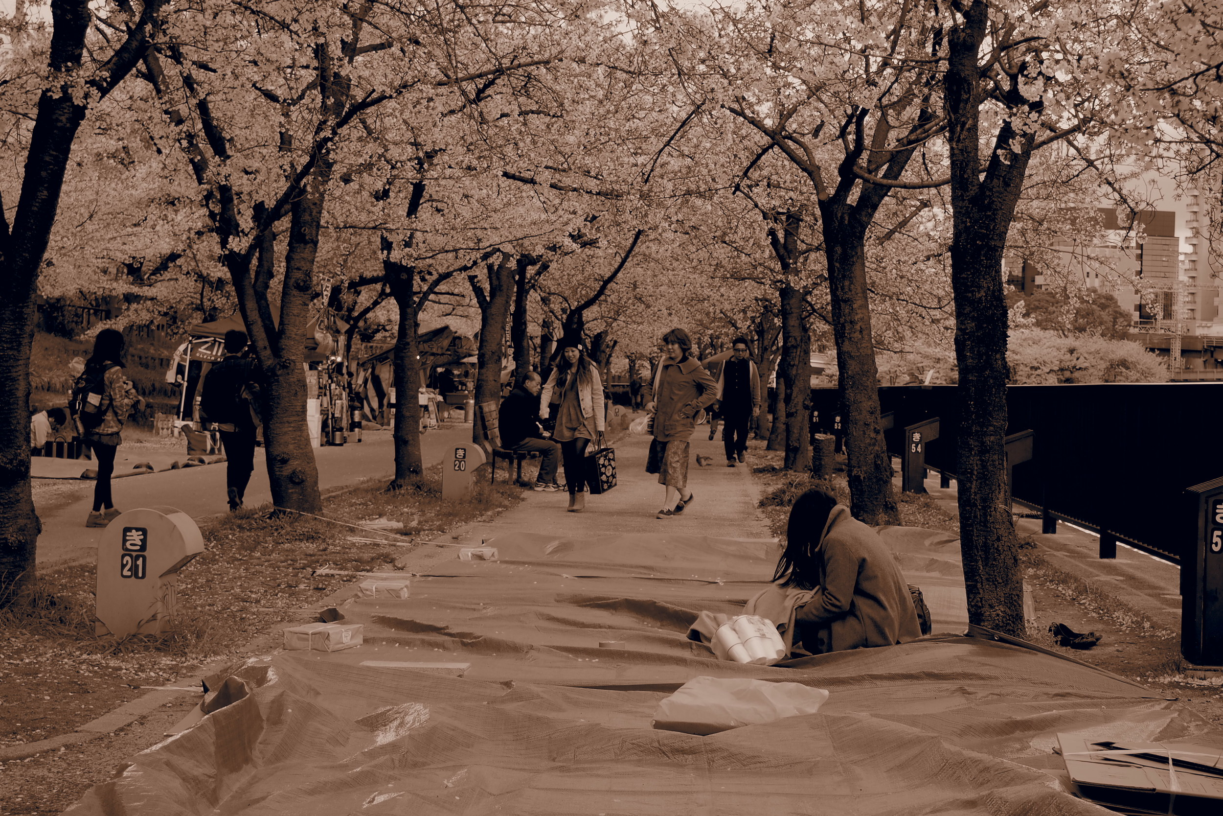 Tarps spread on the ground for people to hanami (flower watch).