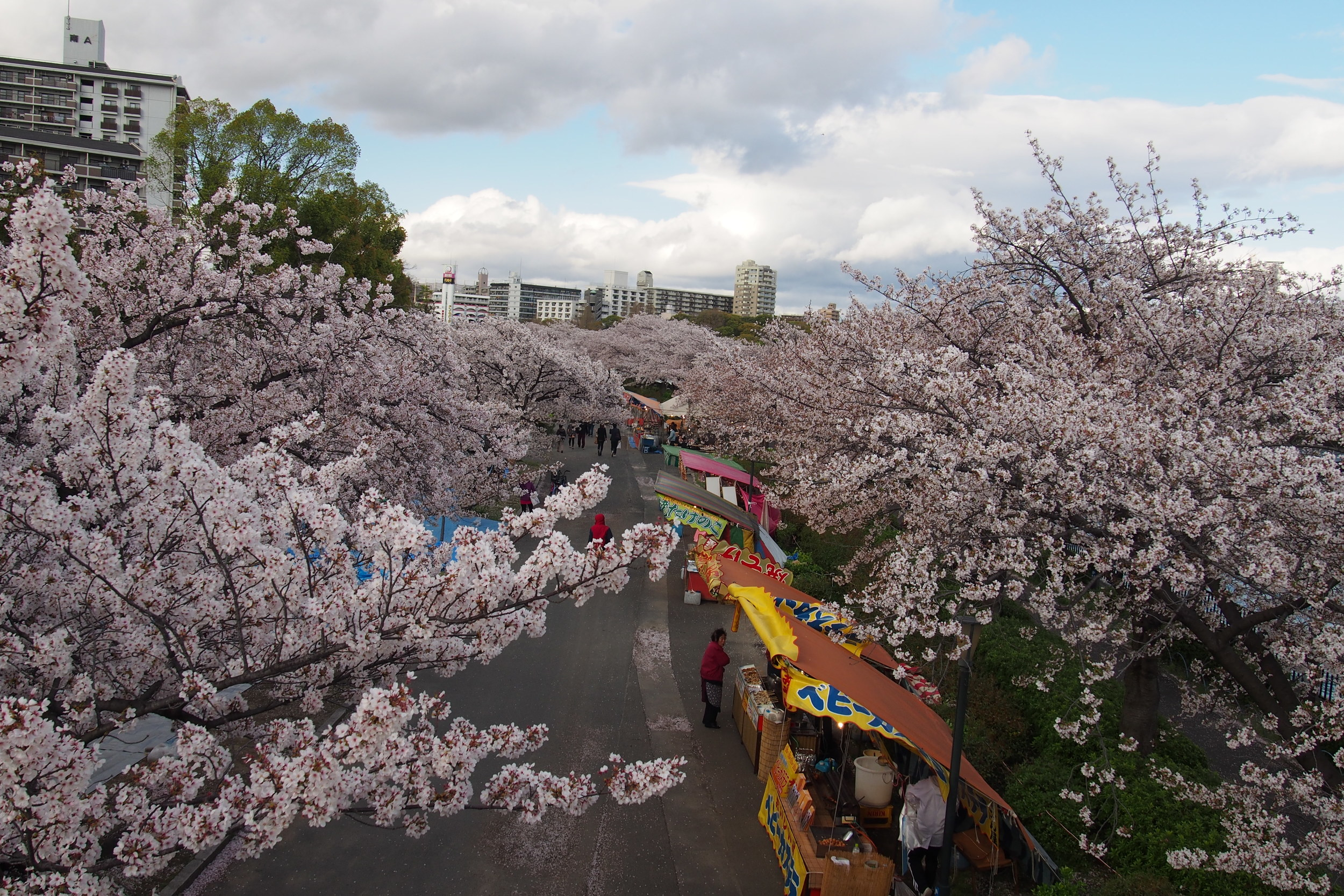 Stalls selling food and drinks for people who are hanami-ing