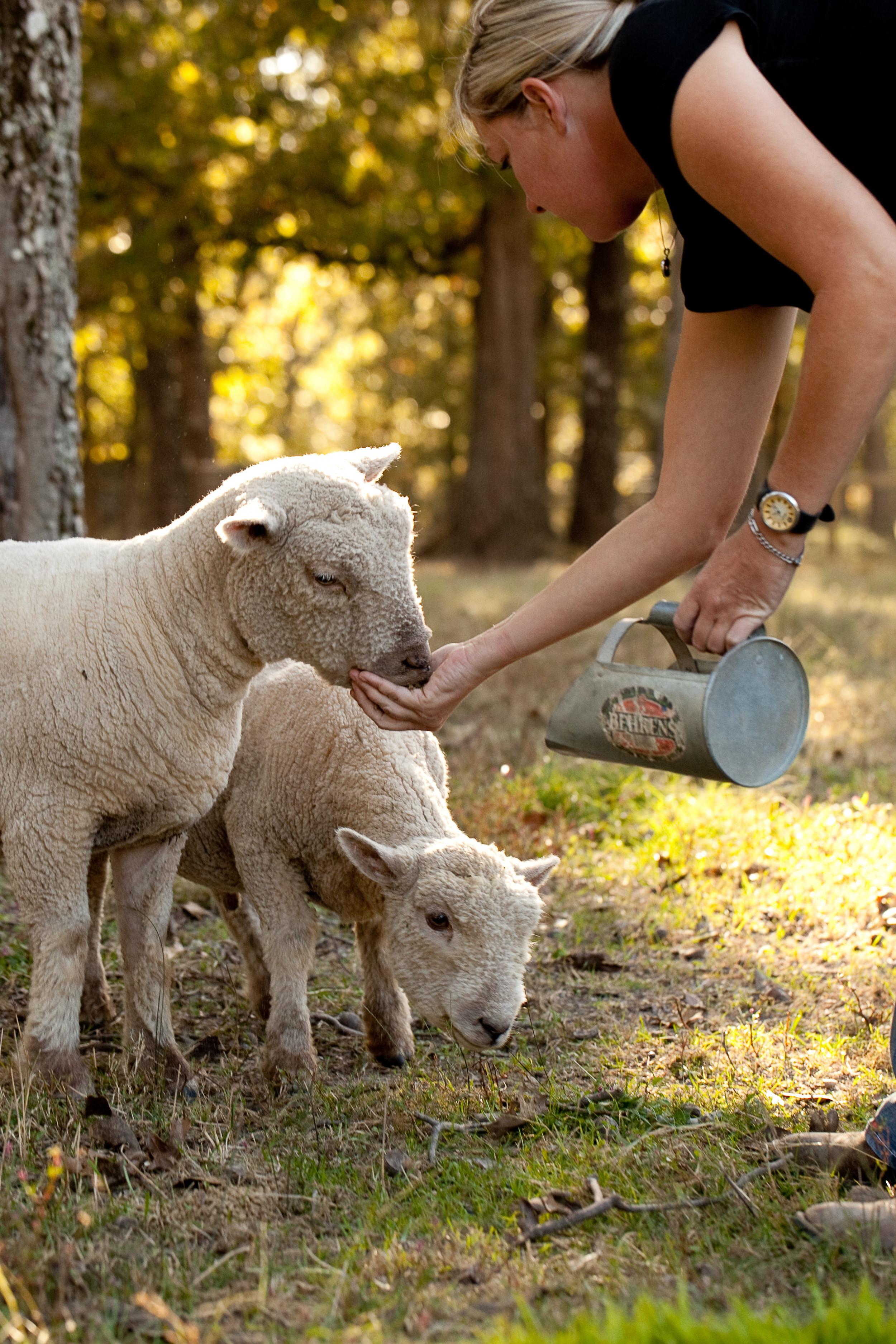 me feeding sheep.jpg