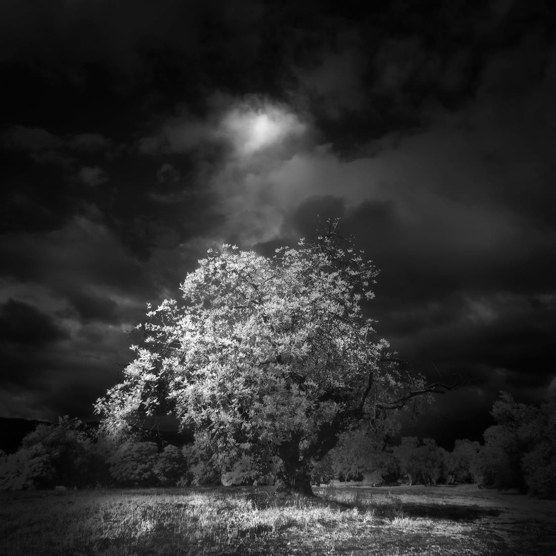 fine-art-commercial-gallery-black-white.jpg