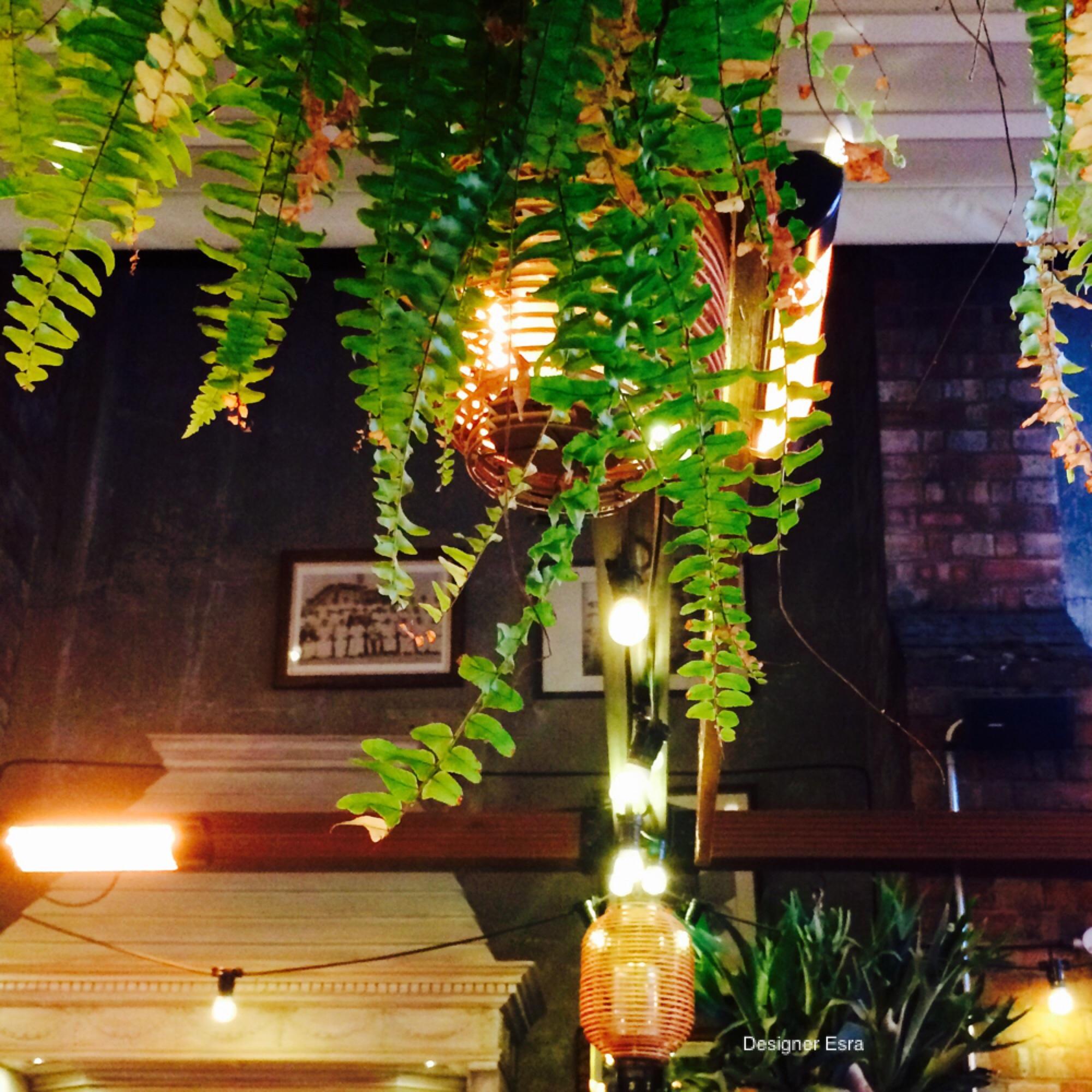 Lights and plants