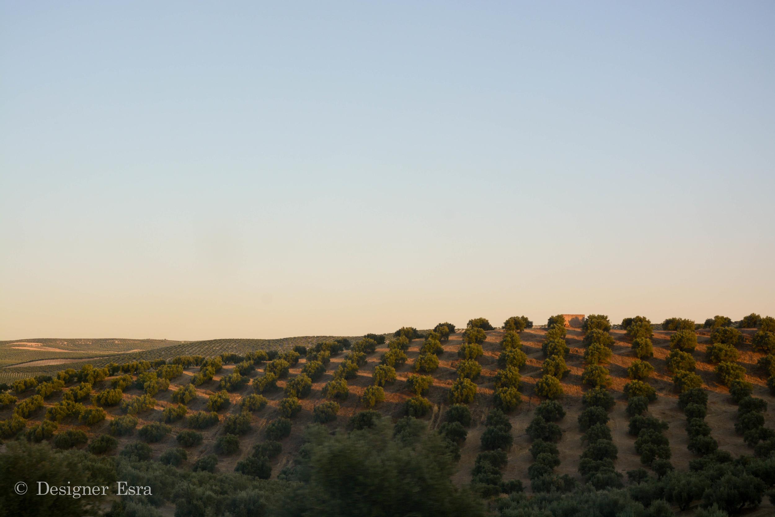 Drive From Cordoba to Granada
