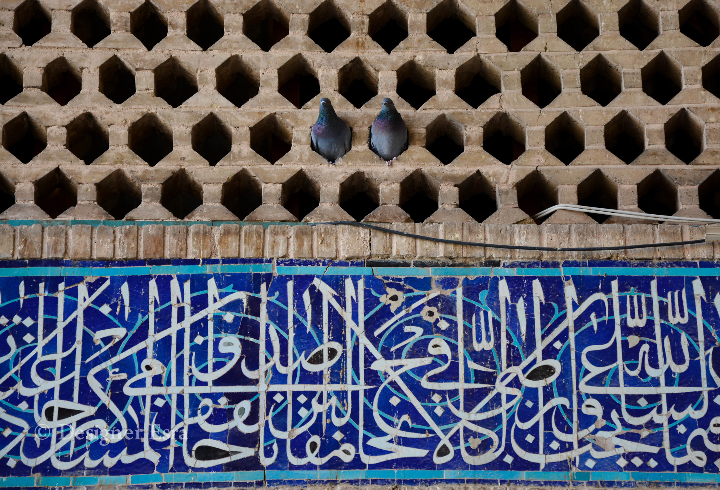 Love Birds in Iran