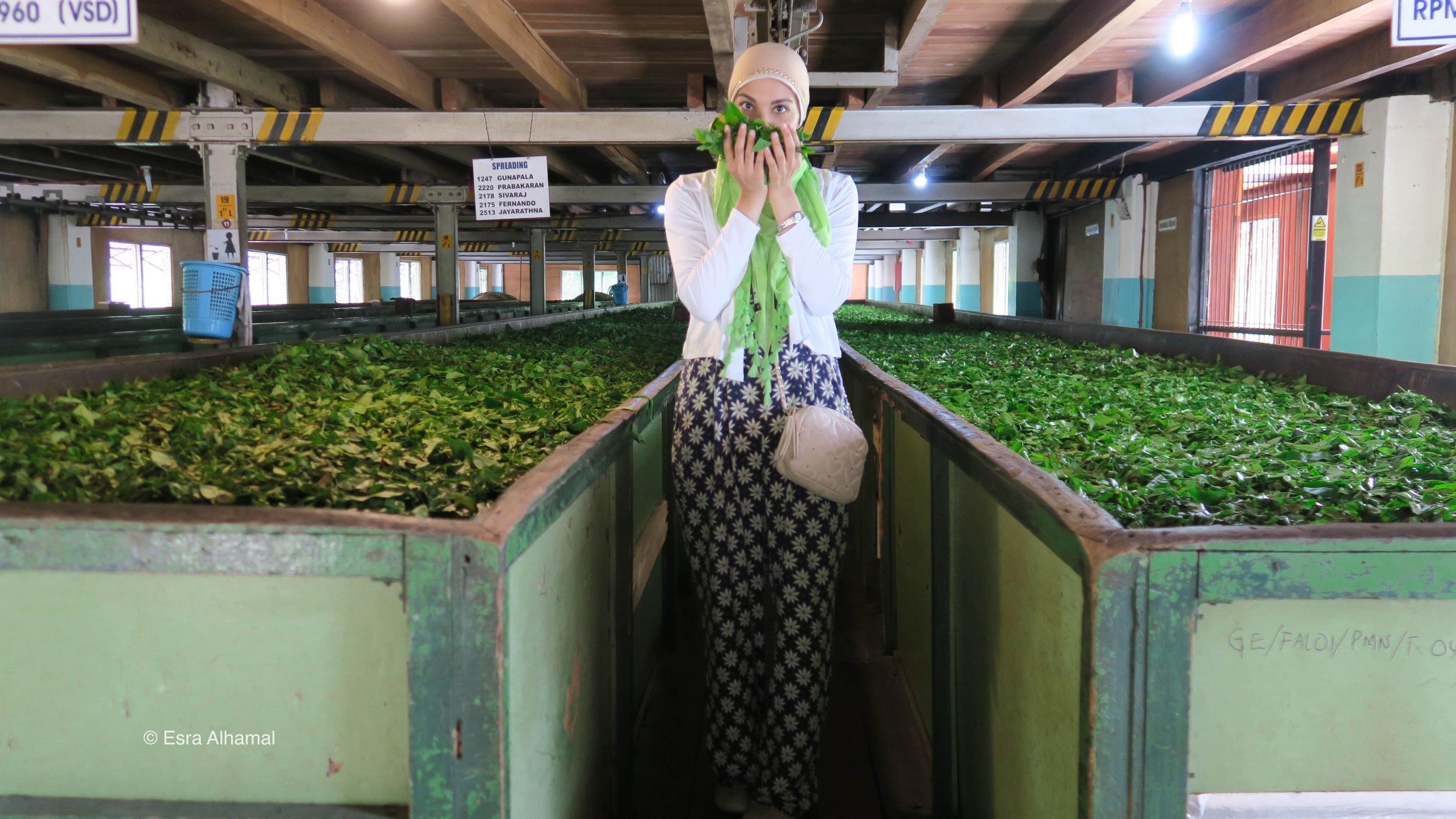 In the  Geragama Tea Factory
