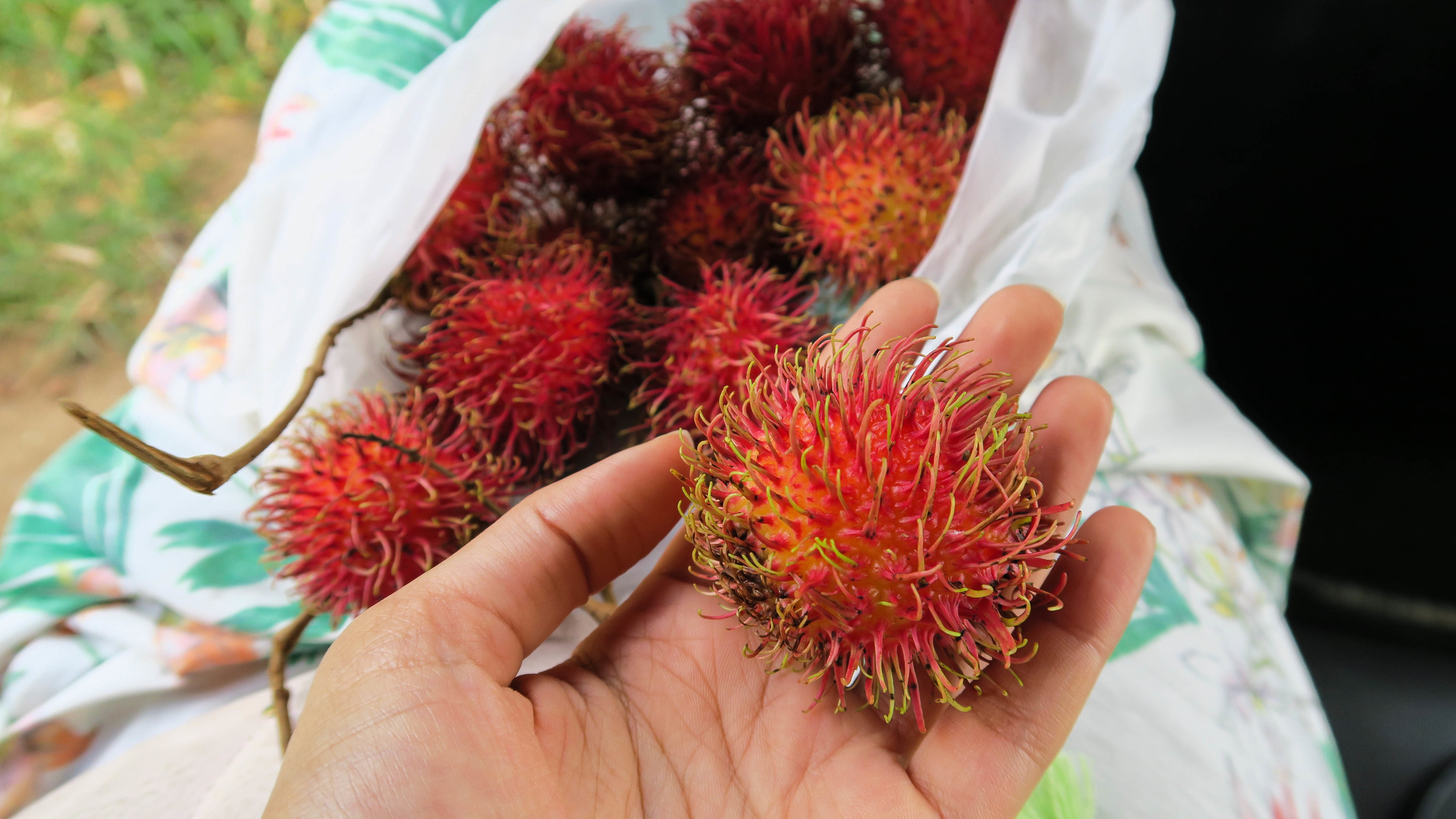 Dragon Fruit in Sri Lanka