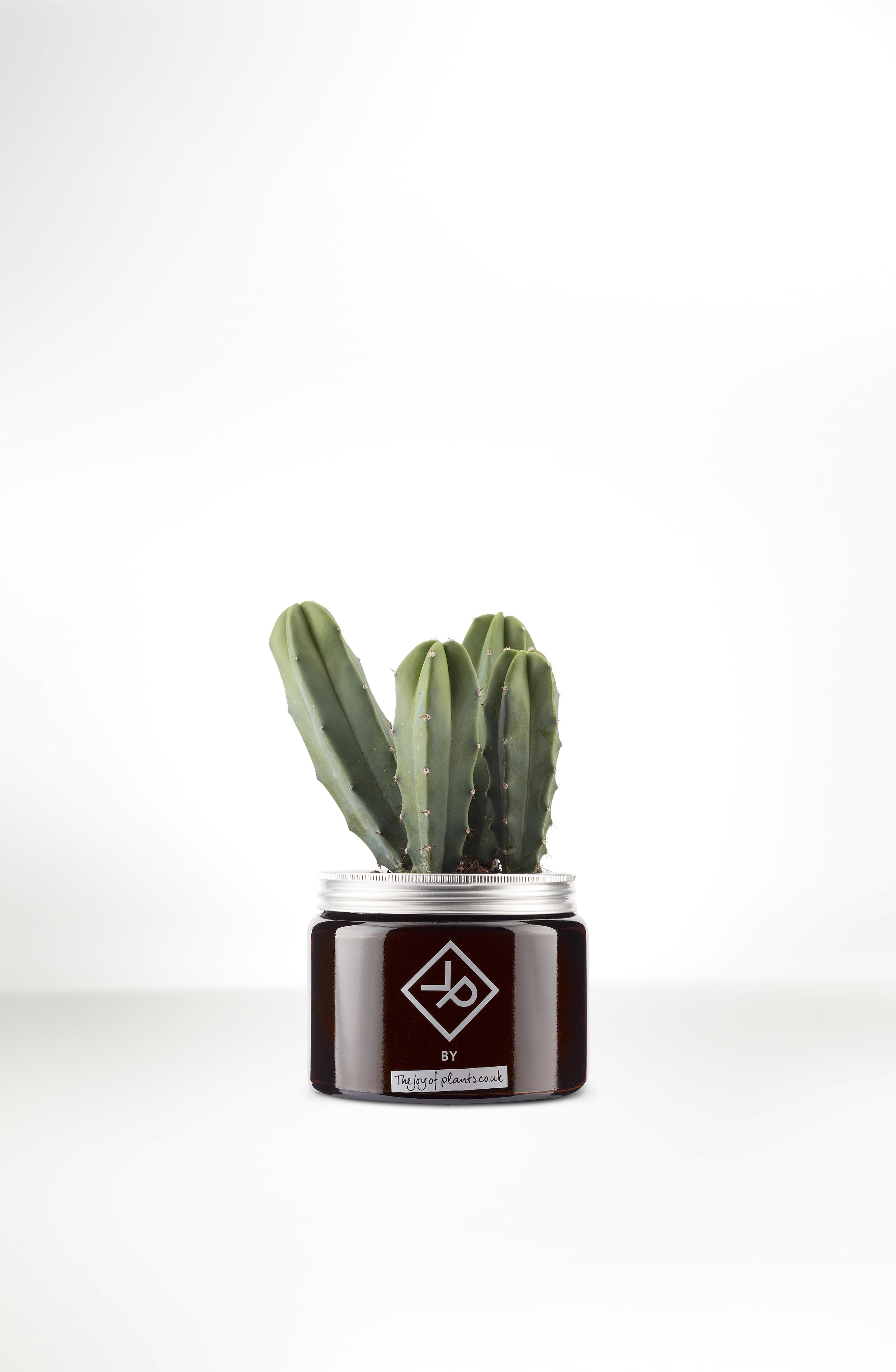 Man Plants
