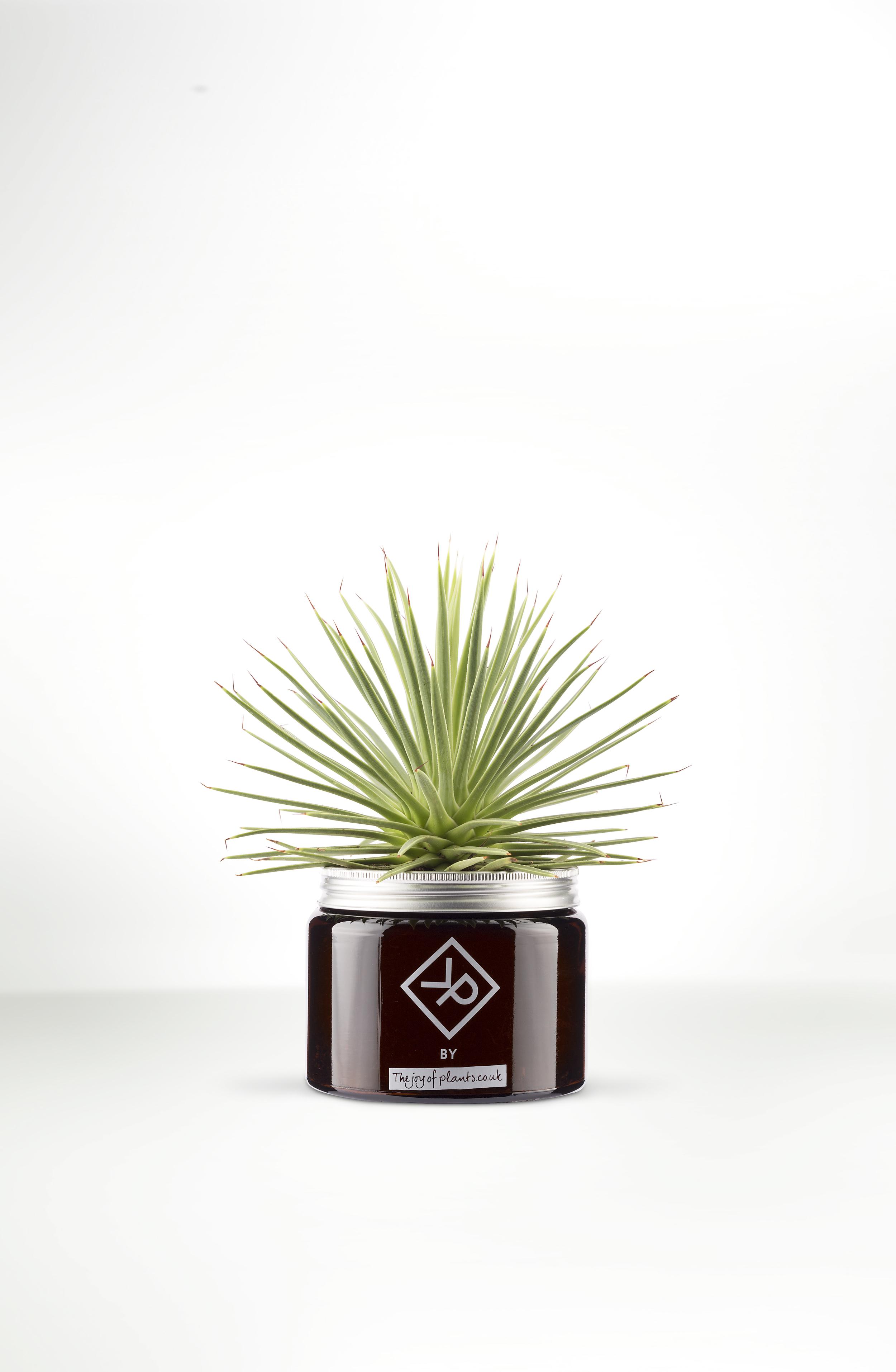 Plants for men