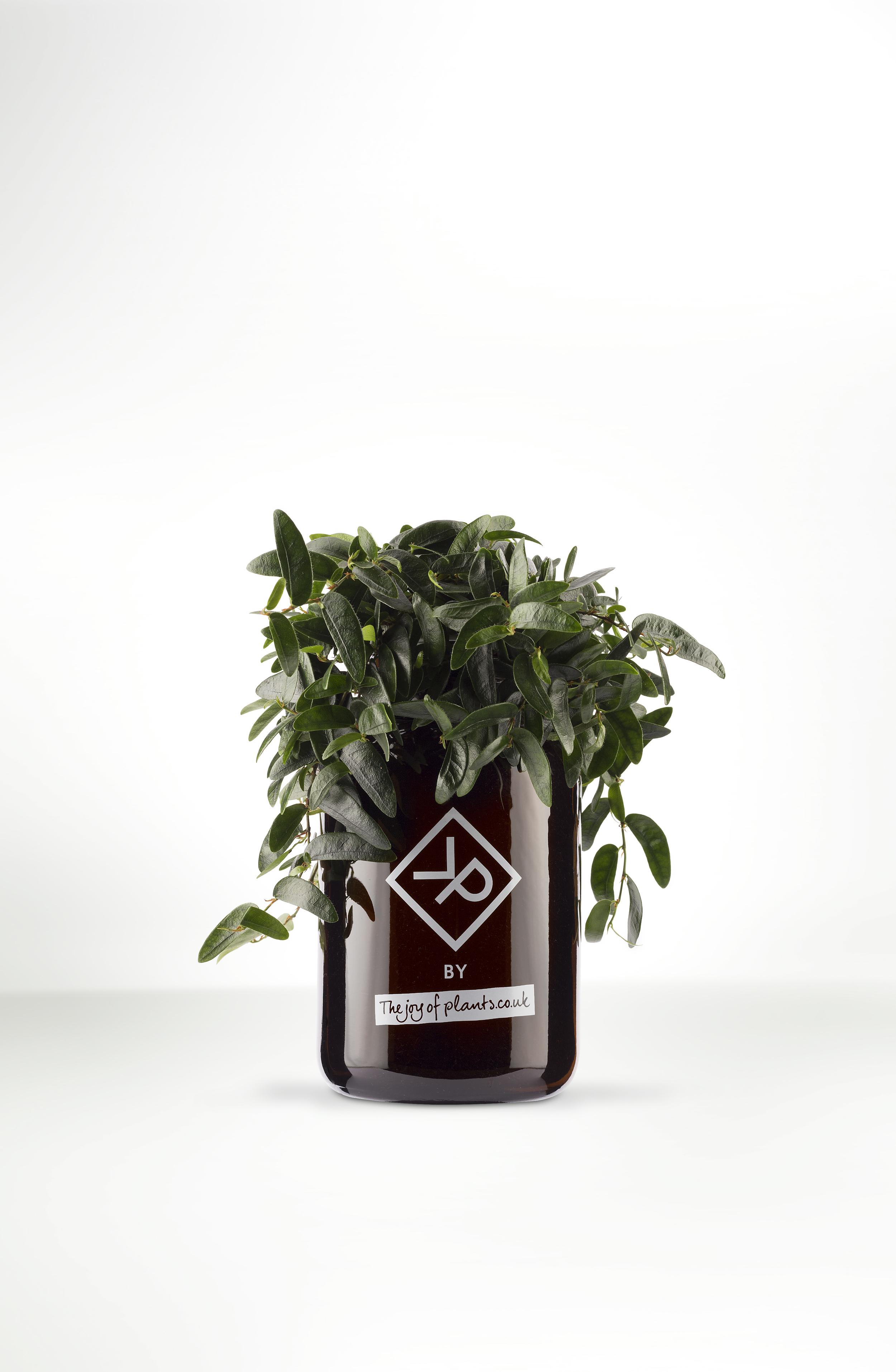 The Joy of Plants