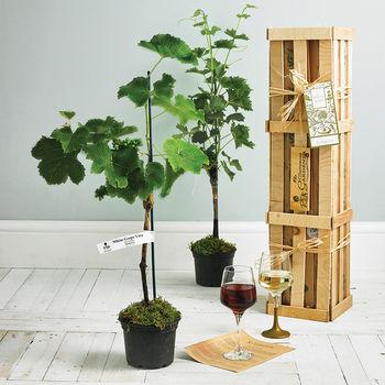 Grapevine Crate