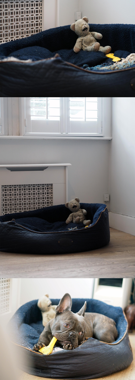 Before Homesense Dog Corner.jpg