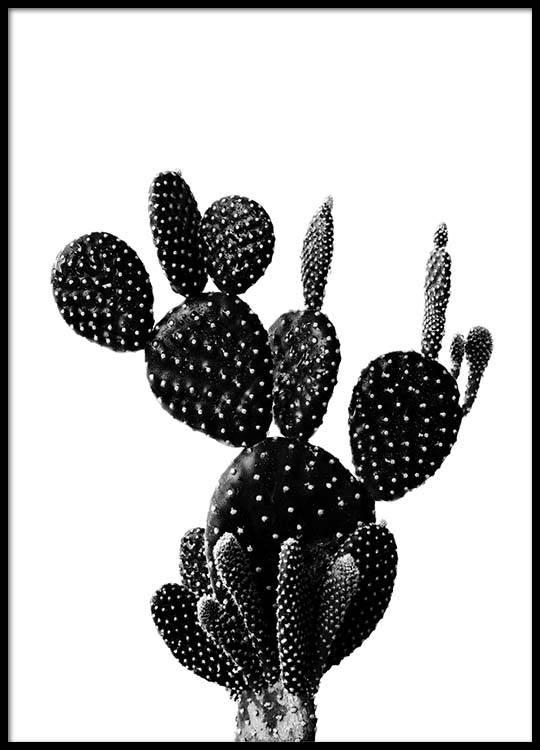 Desenio Black Cactus Poster