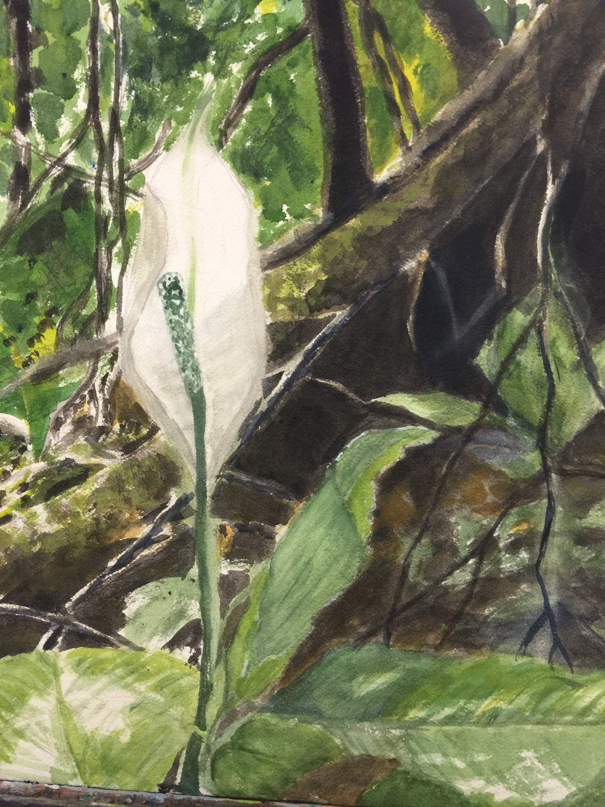 """Cecilia Lotse """"In the Cloud Forest"""" 2016 watercolor and gouache on paper, 12 x 16 in."""