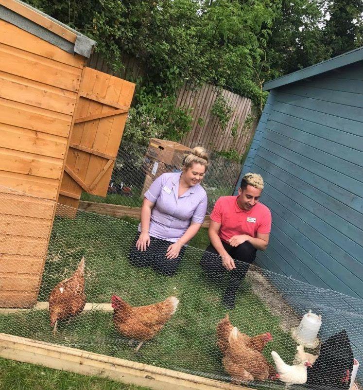 Field Lodge chickens 2.jpg