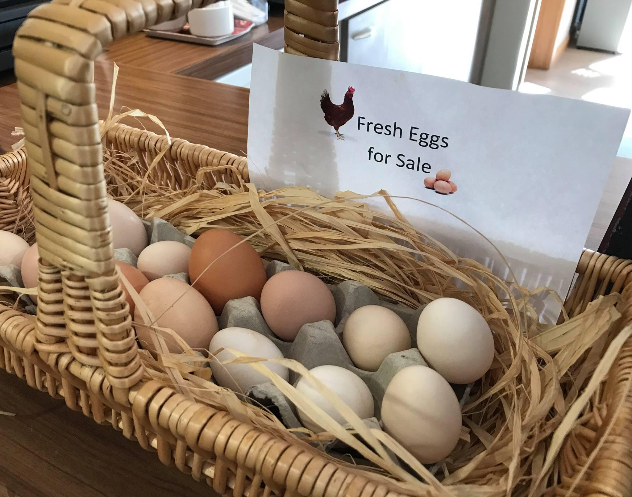 Field lodge eggs.jpg