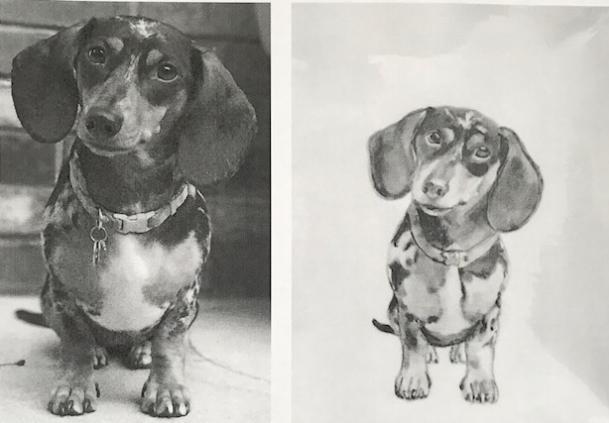 dachshund for web.jpg
