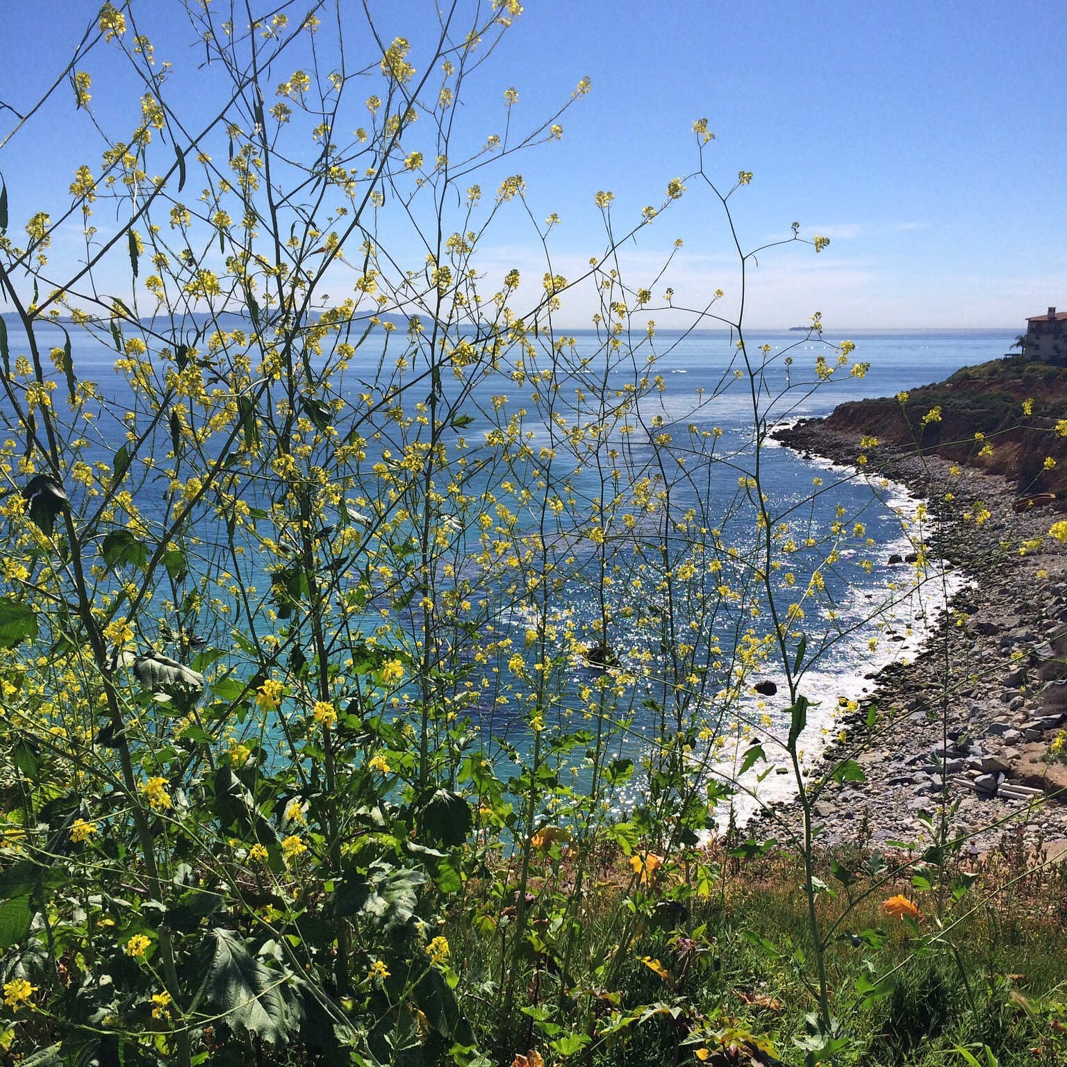 Cliffside view in Palos Verdes.