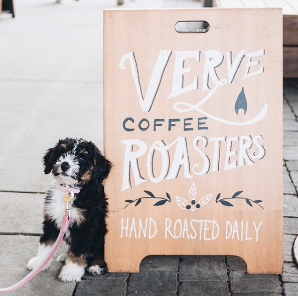 Photo courtesy of Verve Coffee Roasters