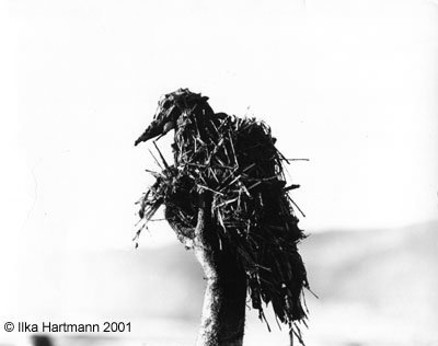 Photograph,  Grebe victim of the San Francisco Oil Spill,  January 18, 1971, Photographer: Ilka Hartmann. Copyright Ilka Hartmann.