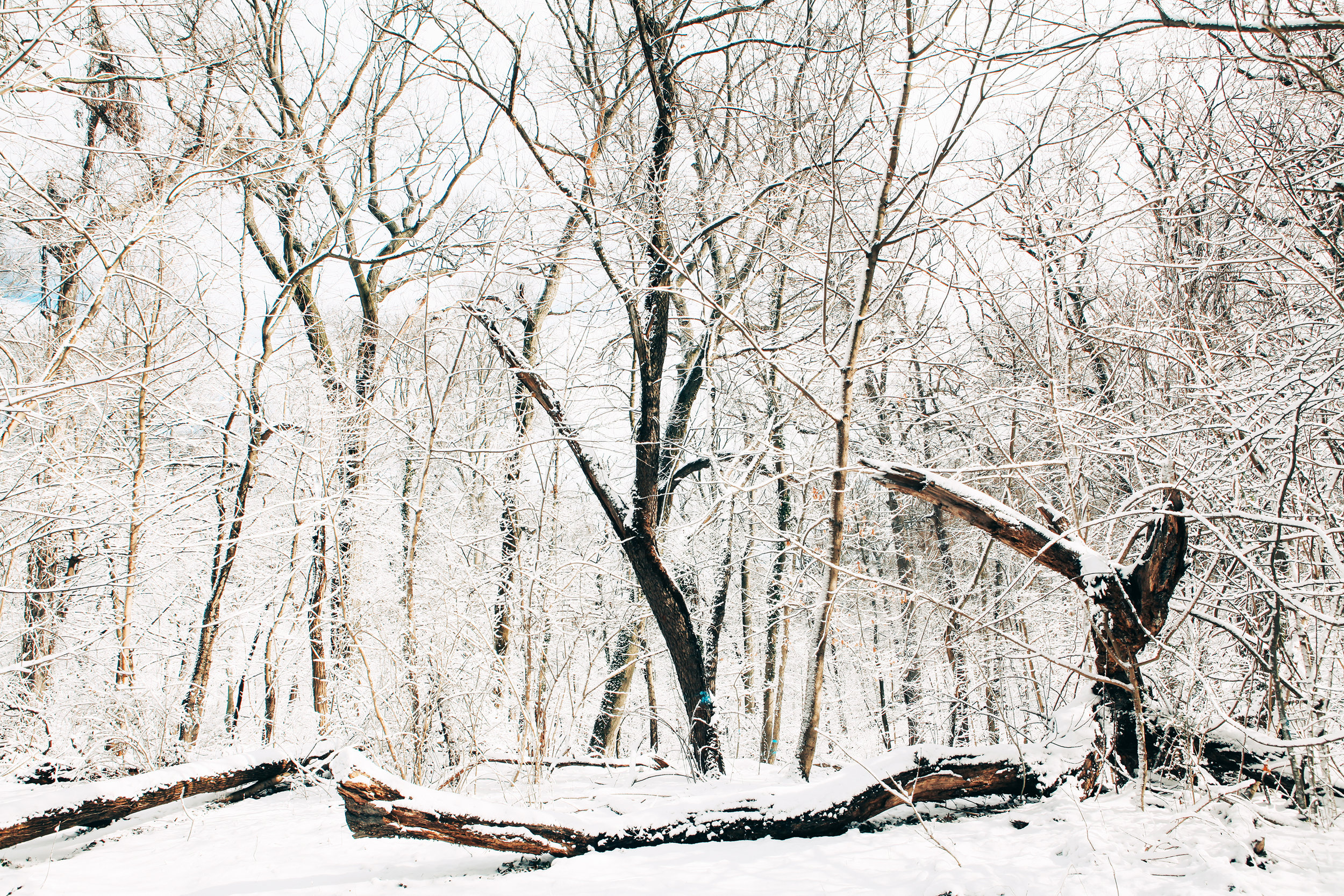 20170209_Philadelphia_Snow_Fiarmount_Park_Joe_Mac_Creative_0120.jpg