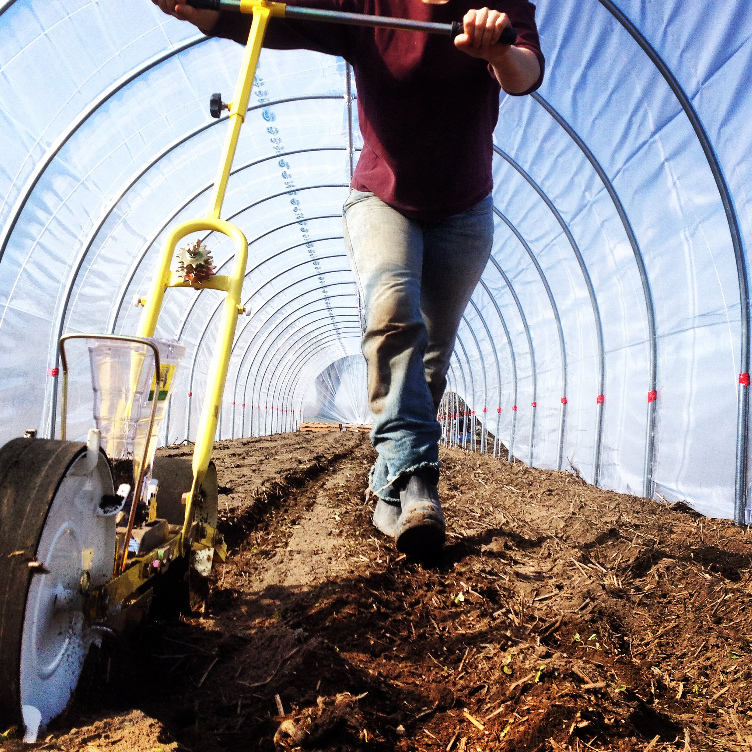 Seeding in the high tunnel