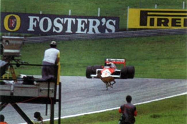 stefan johansson mclaren f1 deer accident 1987.jpg