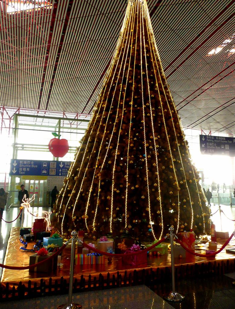 tree at capitol airport terminal 3