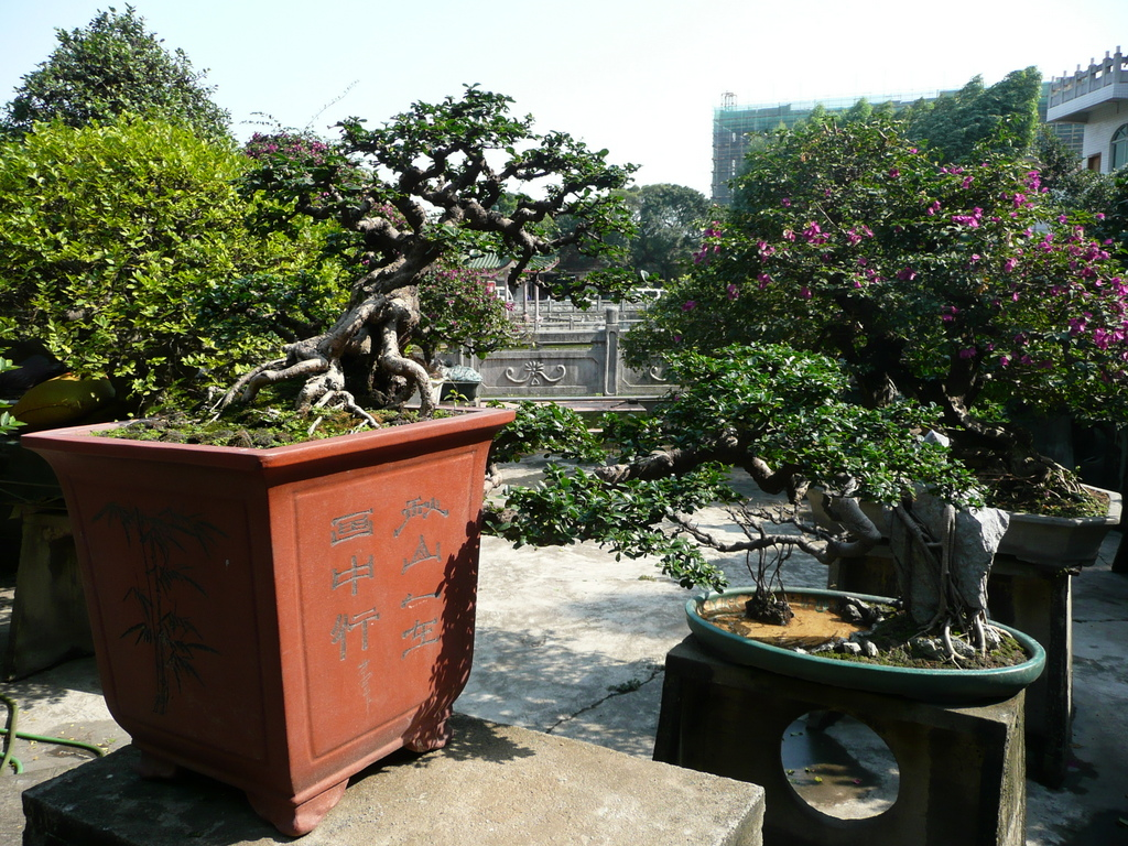 view of qing wan garden