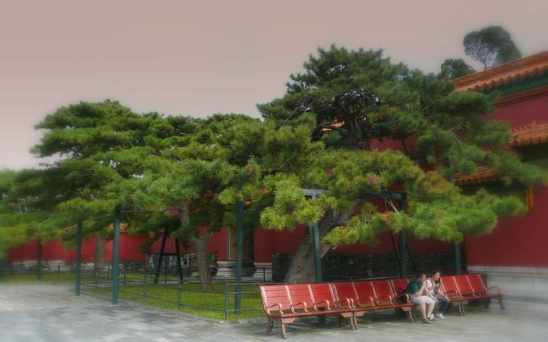 Palace pines