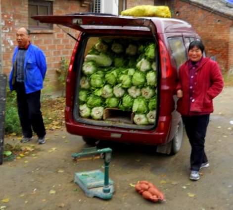 cabbage peddlers