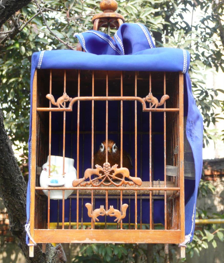 Bird taking the air