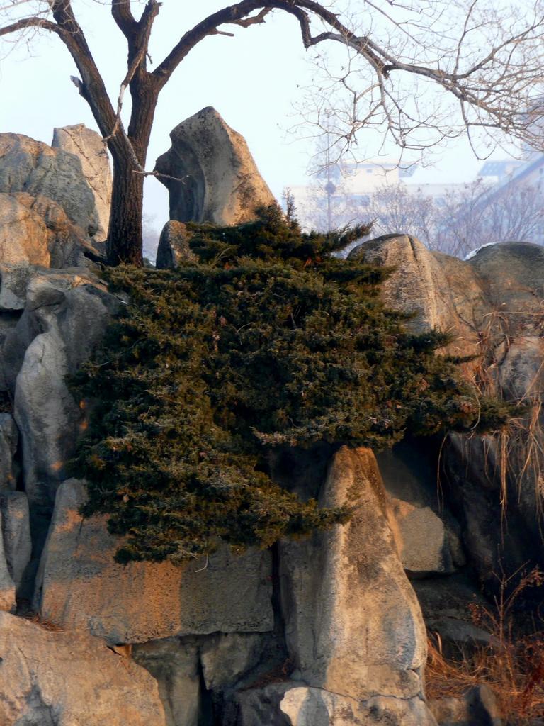 Cascade tree in park