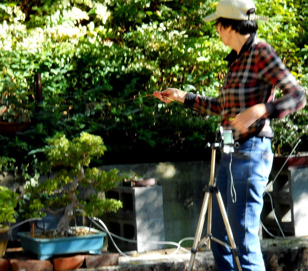 Cheryl photographs bonsai