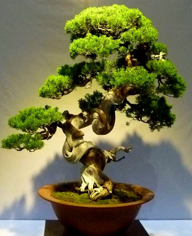 An award winning tree from last year's competition.