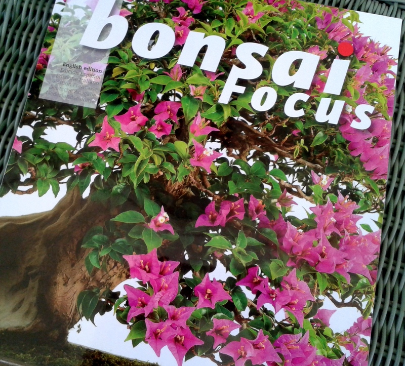 Bonsai Focus cover Jul/Aug
