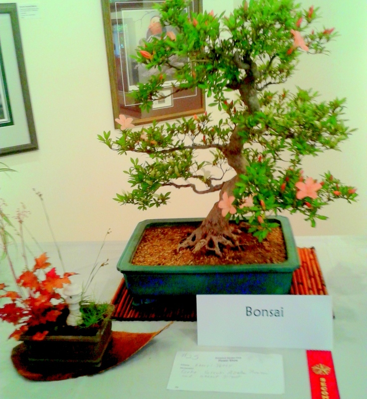 'Goko' winner at Dunsmuir Garden Club show 2014
