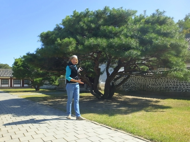 Lu Tian tree