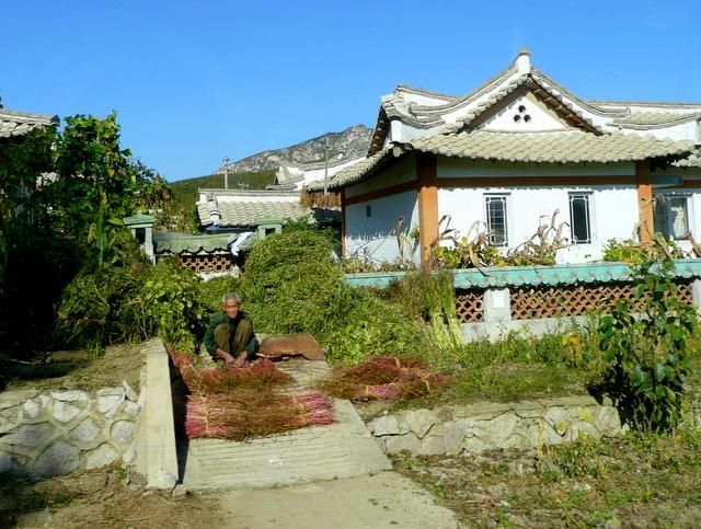 Village houses at harvest time