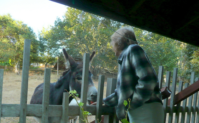 Kathleen visits with Daisy the donkey at Casa Carolina