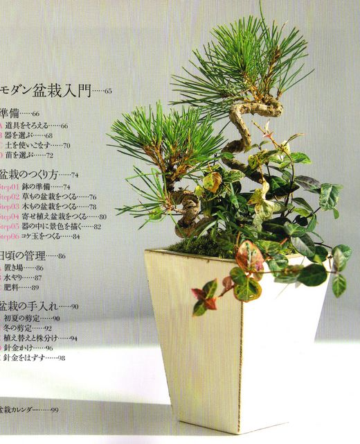 curled pine.jpg