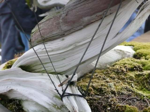 Bonsai technique - wires