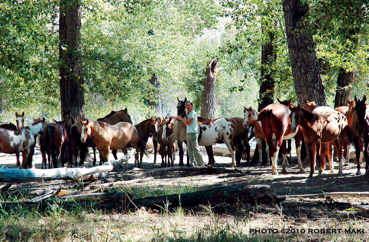 Andrea Maki with wild wild horses, 2010                                   Photo ©2010 Robert Maki