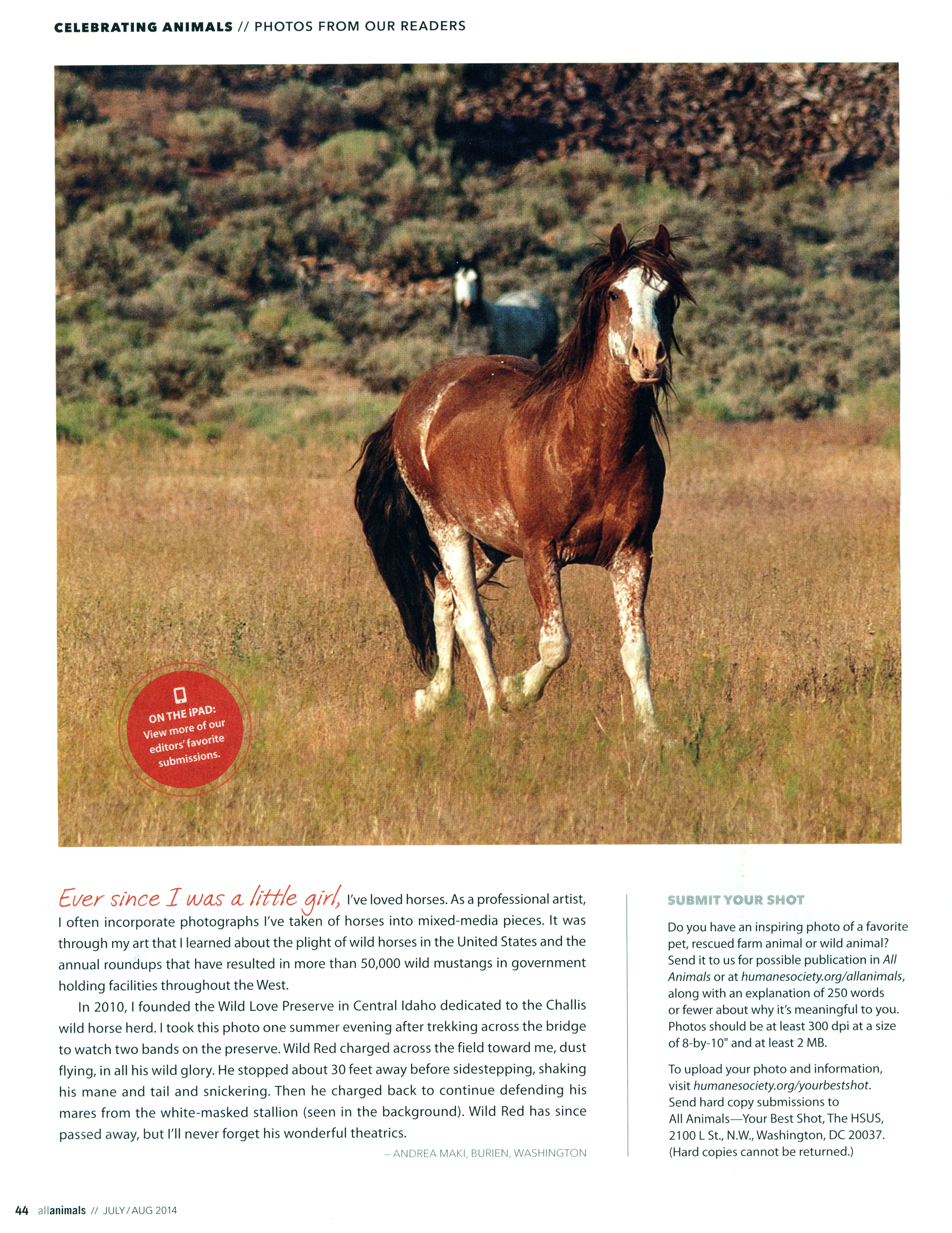 All Animals Magazine, Summer 2014, featuring Wild Red and the White Mask Stallion.   Photo: Andrea Maki 2012