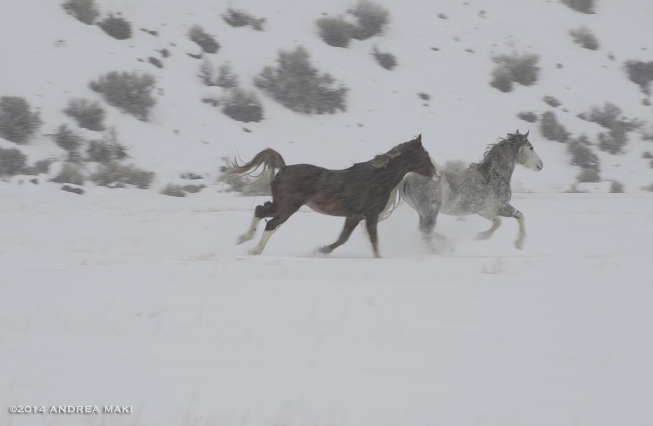 snowpic2014_2_NEWSITE.jpg